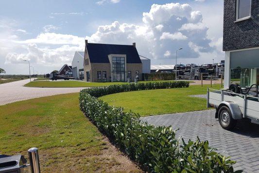 Laurier Genolia - Haagplantenkopen.nl